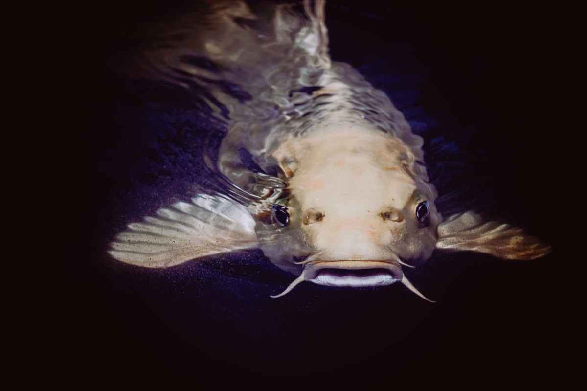 How I got catfished: A corporatestory